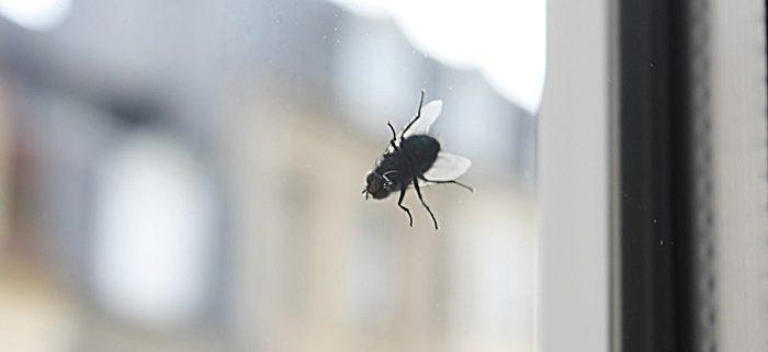 Slika muhe na prozoru