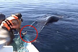 Spasavanje kita