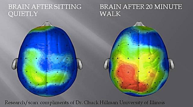 mozak prije i poslije treniranja