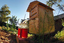 flow košnica med pčelarstvo